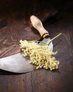 Elder flowers, round knife and cutting board Stock Photos