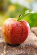 ripe red apple with water droplets - stock photo