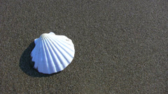 White seashell on a tropical beach with coming wave - HD1080i Stock Footage