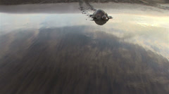 Olive Ridley sea turtle crawls up a beautiful beach to lay eggs. Stock Footage