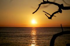 Orange sunset with branches silhouetted - stock photo