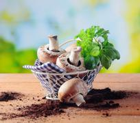 basket of fresh mushrooms and herbs - stock photo