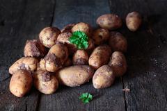 Earthy fresh whole potatoes Stock Photos