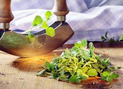 chopping fresh marjoram - stock photo