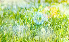 ethereal spring background - stock photo