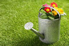 Galvanised metal watering can and flowers Stock Photos
