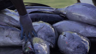 Stock Video Footage of Fisherman picks up netted fish from catch