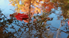 Maple Leaf in Autumn Stock Footage