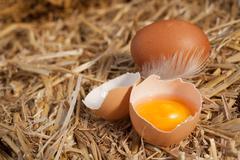Colourful yellow yolk in a broken eggshell Stock Photos