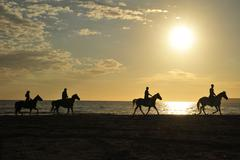 horses with riders on the beach in backlight - stock photo