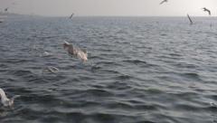 Gulls on the sea - stock footage