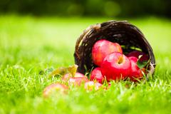 red apples spilling from a basket onto the grass. - stock photo
