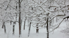 Heavy snowfall in a forest; in foreground a branch tree covered by snow - Stock Footage