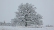 Stock Video Footage of Winter landscape: naked oak tree in a snowfield during an heavy snowfall.
