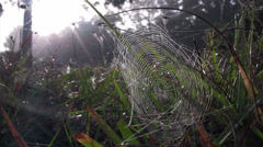 A dewy orb spider web in morning sun. Stock Footage