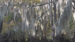 A POV shot traveling through a swamp in the Everglades showing Spanish moss Stock Footage