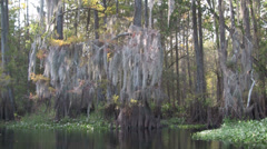 A POV shot traveling through a swamp in the Everglades. Stock Footage