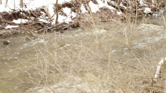 Melting Snow in Spring, Rushing Creek Footage Stock Footage