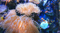 Close-up view of colourful tube sea anemones - HD720P Stock Footage