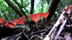 Low angle of mushrooms growing on the forest floor. Stock Footage