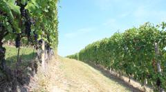 Pan view of vineyards around Barbaresco, Langhe, the famous italian wine Stock Footage