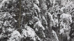 Heavy snowfall in a forest - HD1080p Canon 5DMkII - stock footage