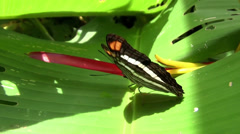 A butterfly spreads its wings on a green leaf. Stock Footage