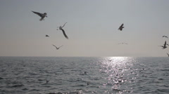 Gulls on the sea and islands Stock Footage