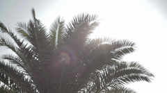 Sun, palm and hand Stock Footage