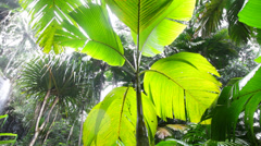 Pan view on a tropical forest during a rainstorm. Upward view with big palm Stock Footage