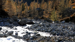Mountain river flows in a forest in autumn season - HD1080P by Canon 5D MkII Stock Footage
