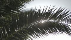 Palm Leaf under the sun - stock footage
