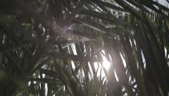 Palm Leaf and sun - stock footage