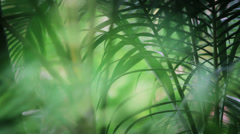 Tropical Jungle Foliage Stock Footage
