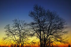silhouette of trees at sunrise - stock photo