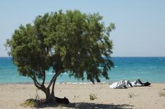tree beach - stock photo
