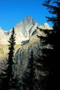 aiguille noire (mont blanc) rocky peak, in foreground pine forest, sunny day; su - stock photo