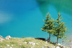 Stock Photo of two mountain pine trees over a deep blue water