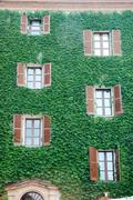 Stock Photo of italian house wall covered by ivy