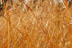 Stock Photo of dry grass close-up