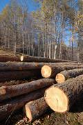 Close-up photo of wood pile trunks Stock Photos