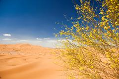 Stock Photo of desert flowers