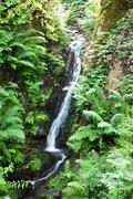 Small rapid mountain brook Stock Photos