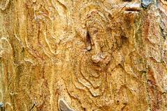 bark texture - stock photo