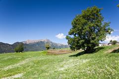 Stock Photo of mountain meadow