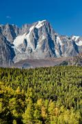 mountain forest - stock photo