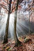 Stock Photo of autumn woods