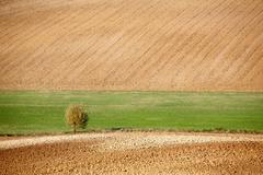Stock Photo of countryside landscape