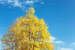 Stock Photo of autumn tree