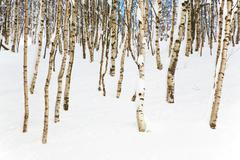 Stock Photo of snowy woods